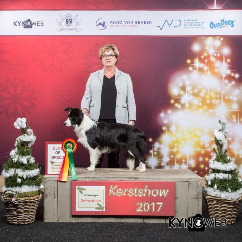 BEST_OF_BREED_1031_KERSTSHOW_2017_Kynoweb__20171217_15_27_54